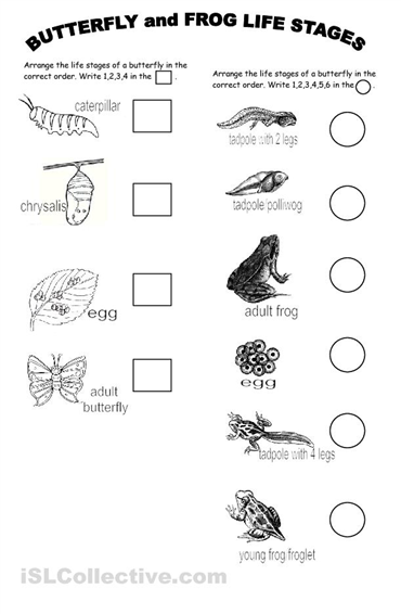 Butterfly and Frog Life Stages TEKS: (10) Organisms and