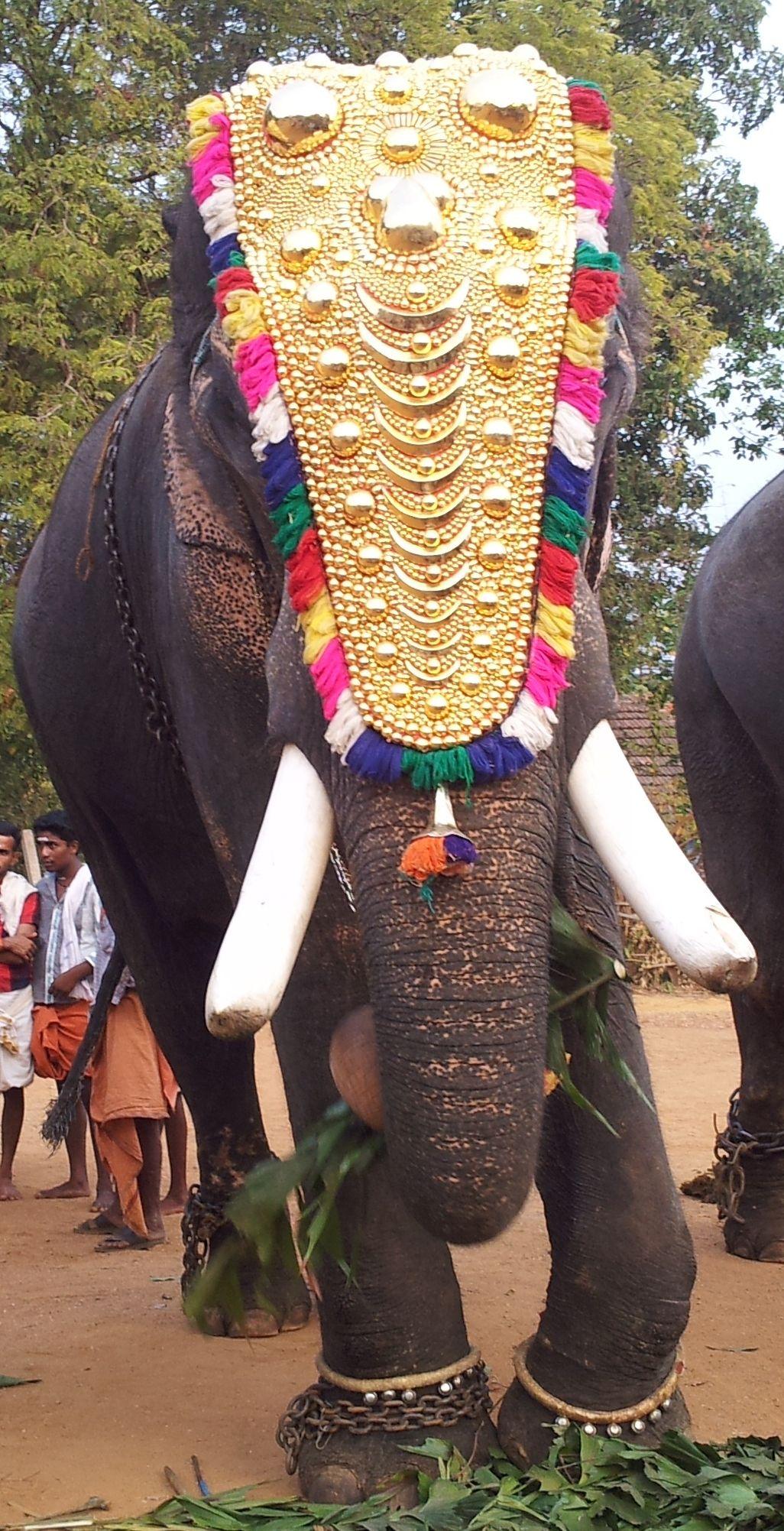 Kerala Elephant Headpiece Save The Date Inspiration Elephant