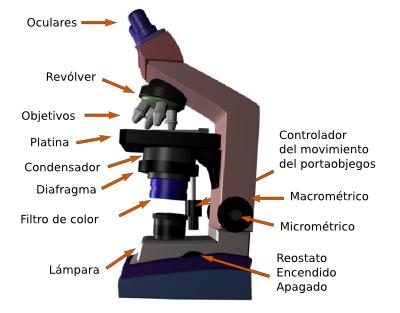 Partes De Un Microscopio Microscopio Optico Imagenes De Microscopio Microscopio