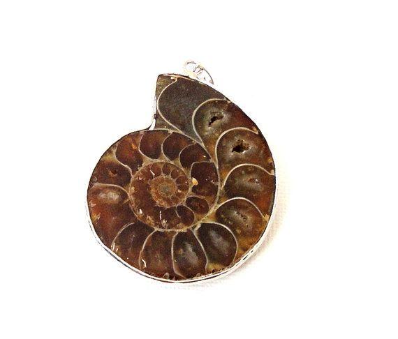 Ammonite Fossil Pendant  Brown Swirly Nutilus Shells by BijiBijoux