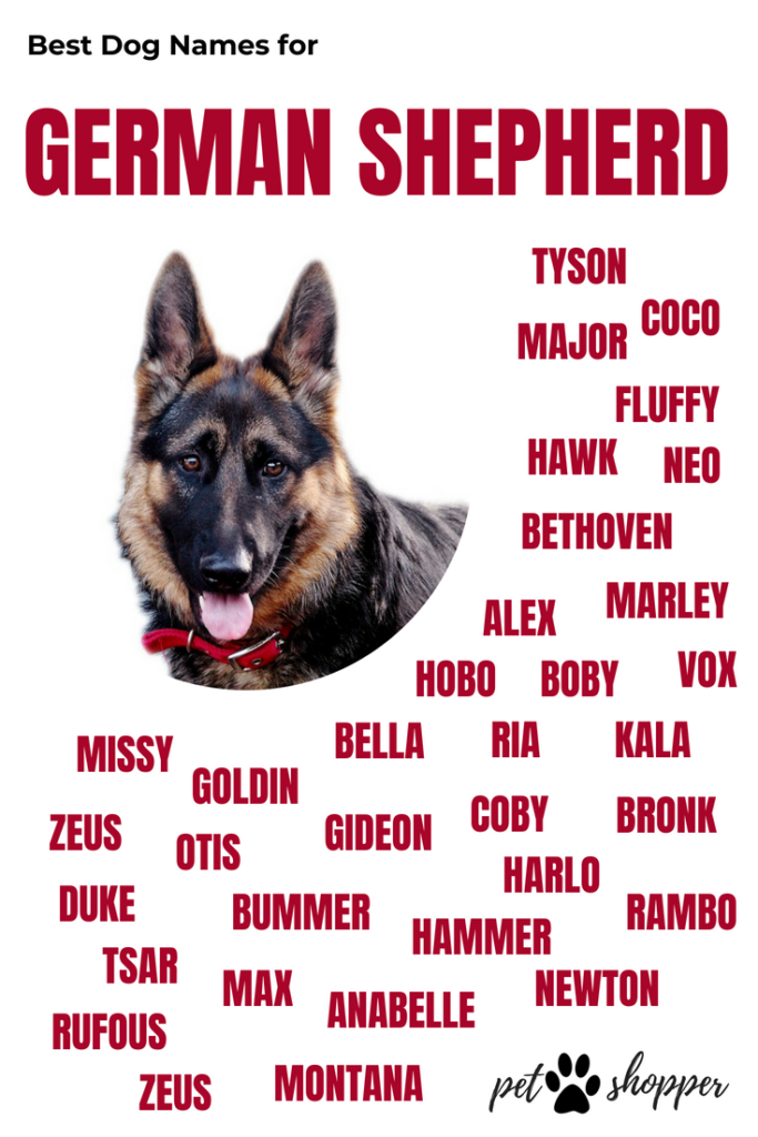 German Shepherd Names Top Best List Male Female Petshoper German Shepherd Names Dog Names German Shepherd Dogs