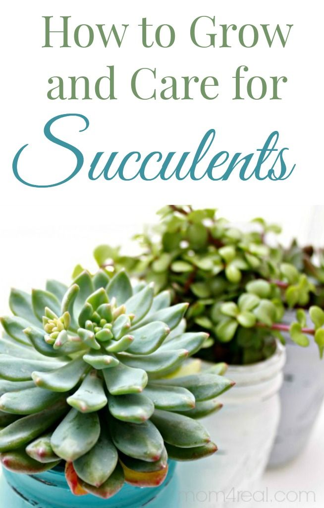 How To Grow And Care For Succulents Succulents Plants
