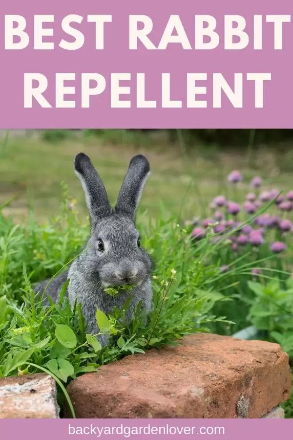 What Is The Best Rabbit Repellent For My Garden? | Rabbit ...