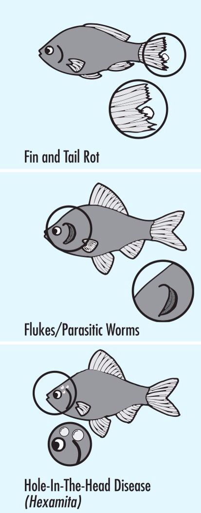 Tropical Fish First Aid Chart To Help Diagnose Fish Disease Or Illness Pdf It Was Created By Api So Yes They Recommend Thei Tropical Fish Betta Fish Fish