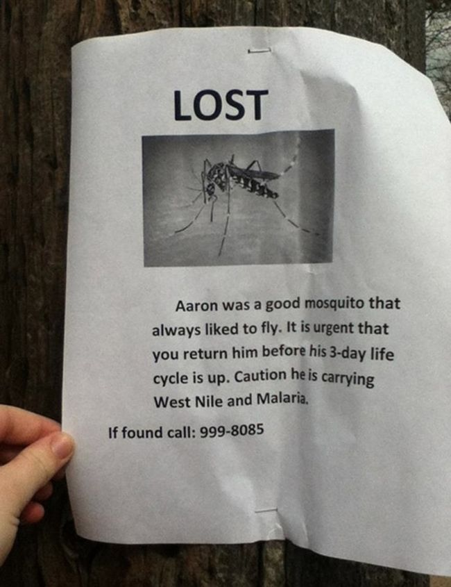 Hilarious Lost Pet Signs Lost Pets Hilarious And Pets - 20 hilarious lost pet signs
