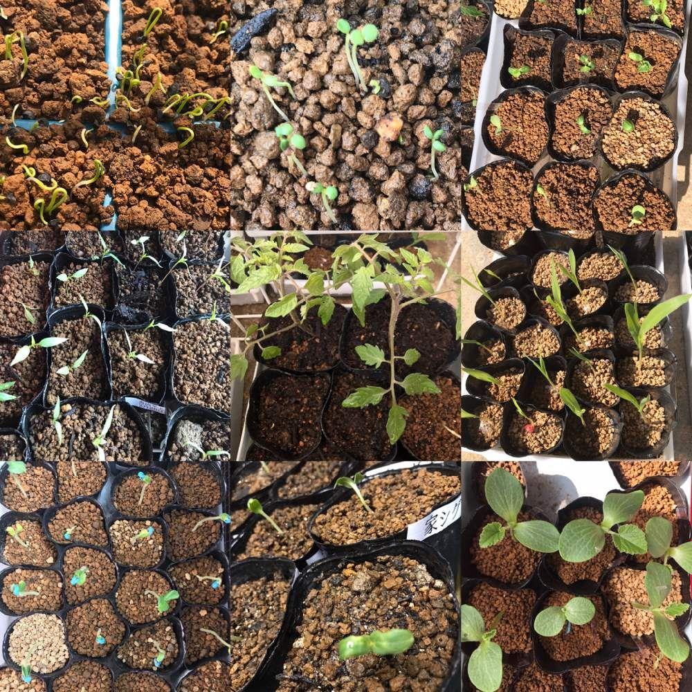 ボード Dailygreensnap 2020 04 07 オススメの植物 花の写真 のピン