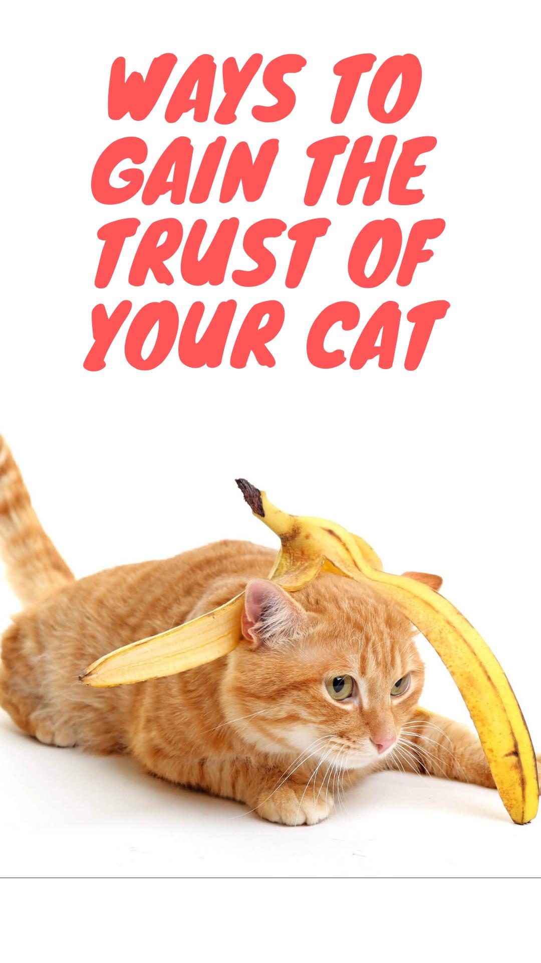 7b72e81b76388a9c2ed4469faa53aa65 - How To Get A Wild Kitten To Trust You