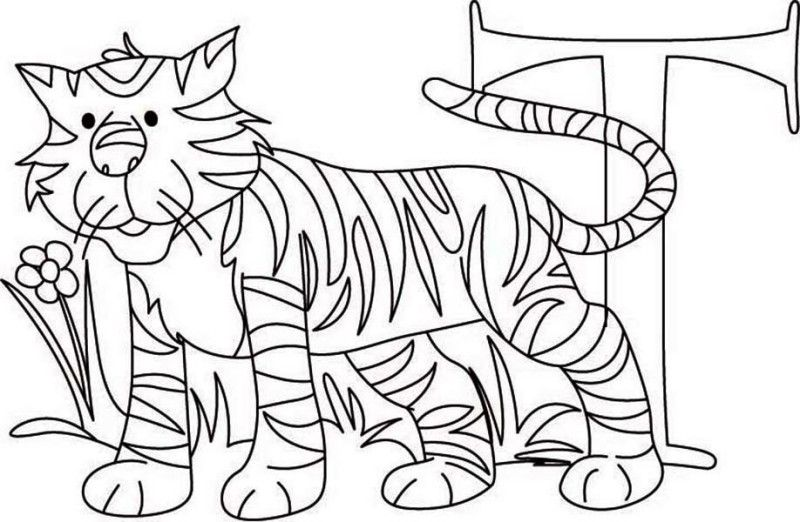 Tiger Learn Letter T For Tiger Coloring Page Learn Letter T For