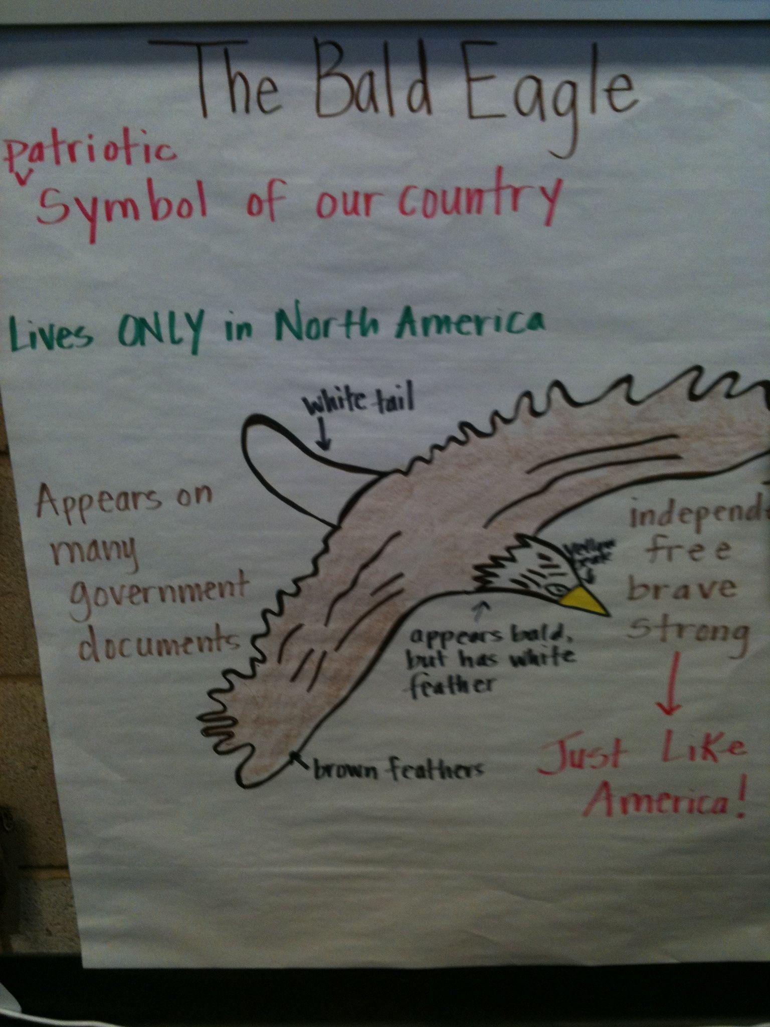 We Stu D National Symbols Bald Eagle Pictorial Input