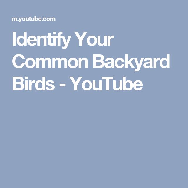 Identify Your Common Backyard Birds - YouTube | Backyard ...