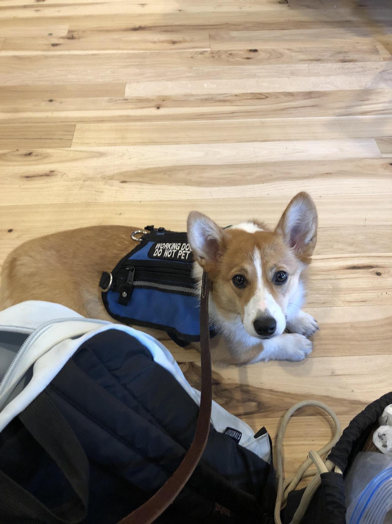 Say hi to Cora! My SDiT 💕 at