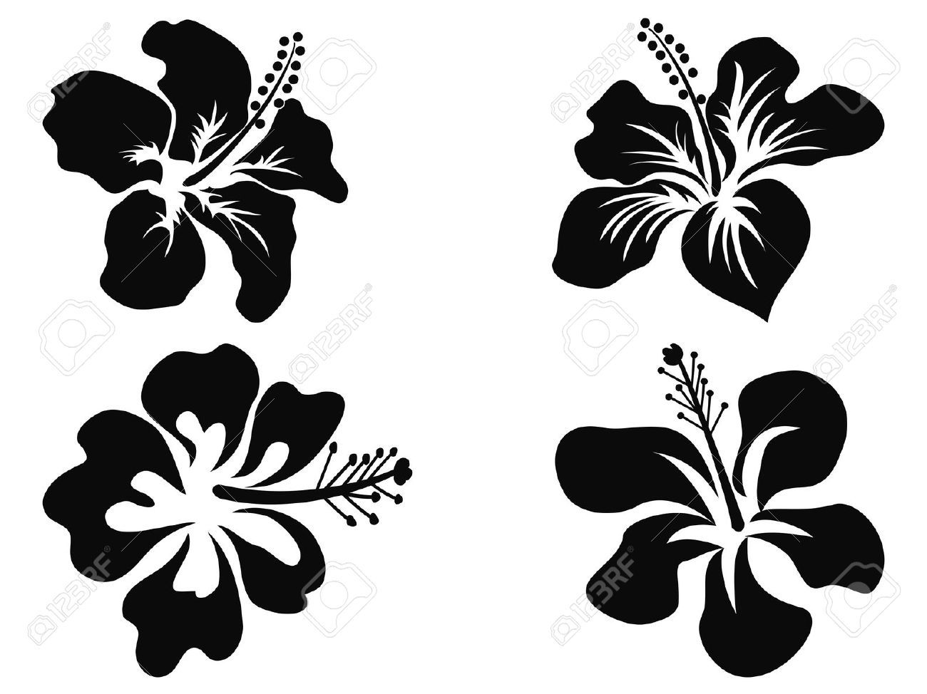 Hawaiian flower hibiscus stencil floral stock photos images hawaiian flower hibiscus stencil floral stock photos images royalty free stencil floral izmirmasajfo