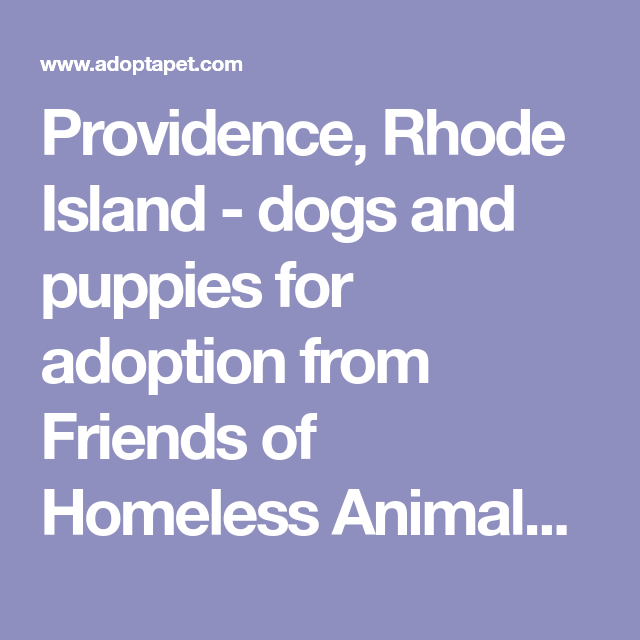 Providence Rhode Island Dogs And Puppies For Adoption From Friends Of Homeless Animals Inc Foha Puppy Adoption Dogs And Puppies Rhode Island