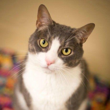 Adoptable Cats Cat Adoption Cat Allergies Cats