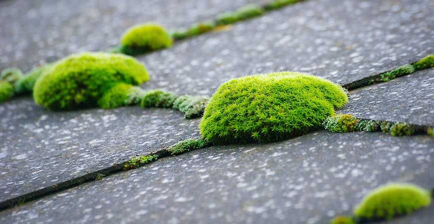 Homeowners Beware Roof Moss Can Spell Insurance Cancellation With Images Roof Maintenance Diy Roofing Roof Repair
