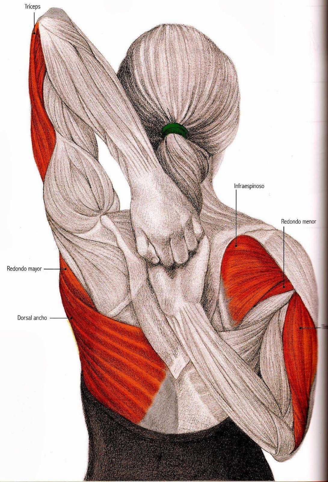 Pilates Marisa  Ejercicios para aliviar el dolor de cuello y hombros ... c825a24e5c9d
