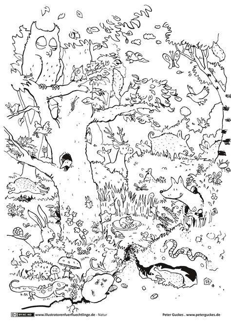 Natur Wald Tiere Guckes Tiere Kita Wald Tiere Und Ausmalbilder