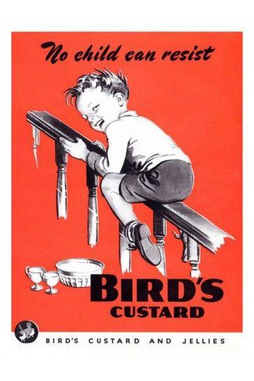 VINTAGE BIRDS CUSTARD ADVERTISING A4 POSTER PRINT