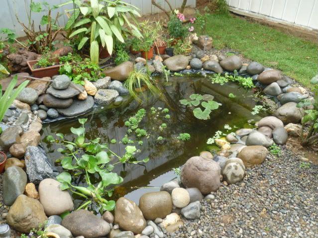 Creaciones faciles para el hogar en las plantasy ante for Estanque artificial en casa