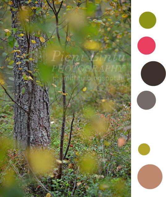 Pieni Lintu: color me weekly