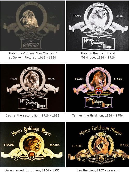 Making The Mgm Logo The Shooting Of A Roar My Smorgasbord Of