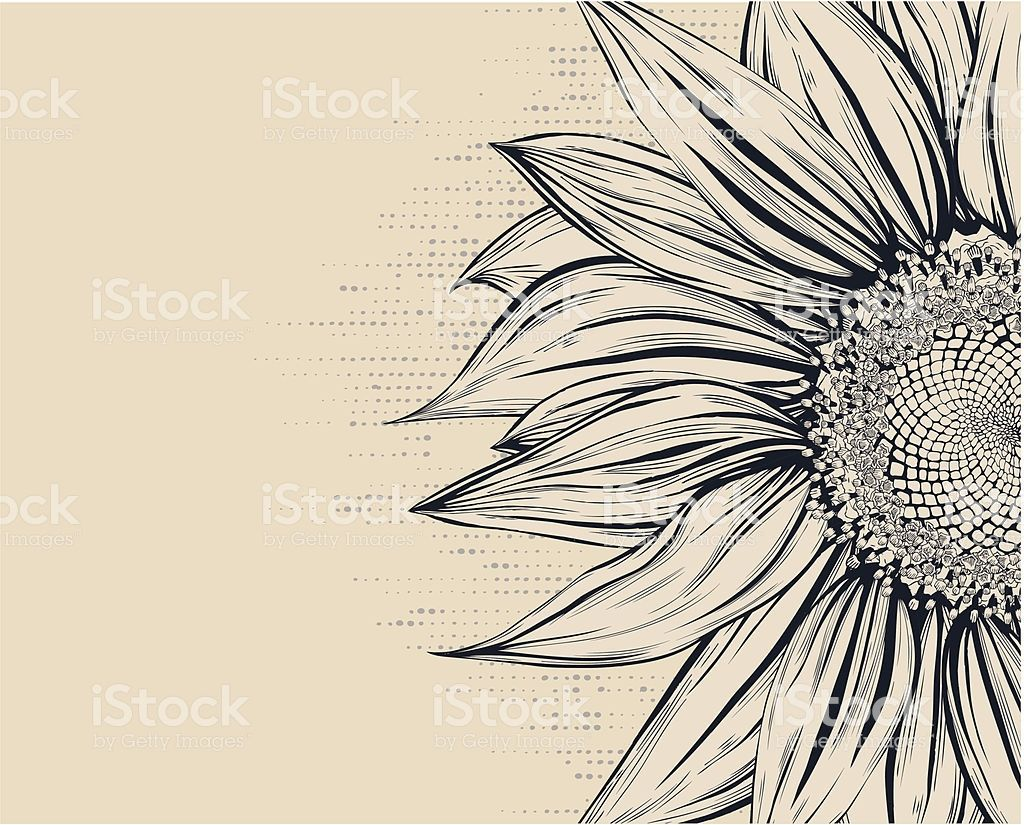 Sunflower Drawing Girasoles Dibujo Ilustracion De Girasol