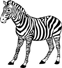 Image Result For Zoo Animals Clipart Black And White Zeichnen Schritt Für Schritt Zebra Zeichnung Zebra Kunst