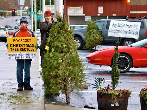 Photos Boy Scouts Christmas Tree Recycling Fundraiser Event Boy Scout Fundraising Boy Scouts Scout Fundraising Ideas