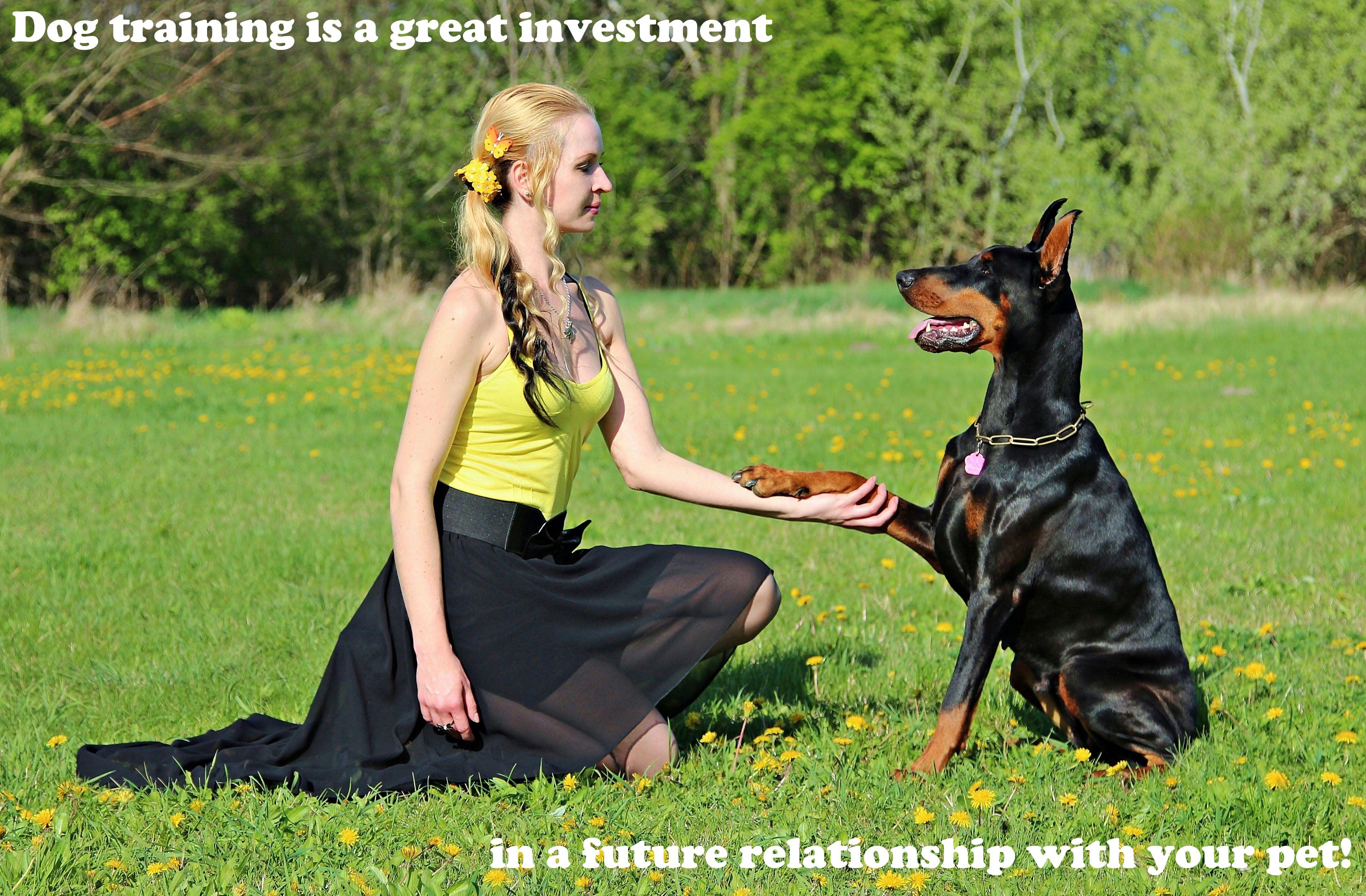 Pin By Petlevelup On Dog Training Dog Training Collar Dog Training