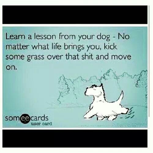Things I learned from my dog
