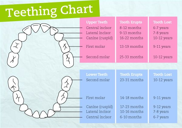 When Do Babies Start Teething And In What Order  Teething Chart