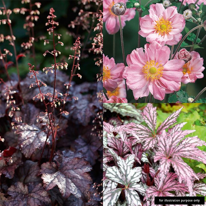 Perennial 'Made For Shade' Plants - Collection - View All Perennial Plants - Perennial Plants - Gardening #shadeplantsperennial