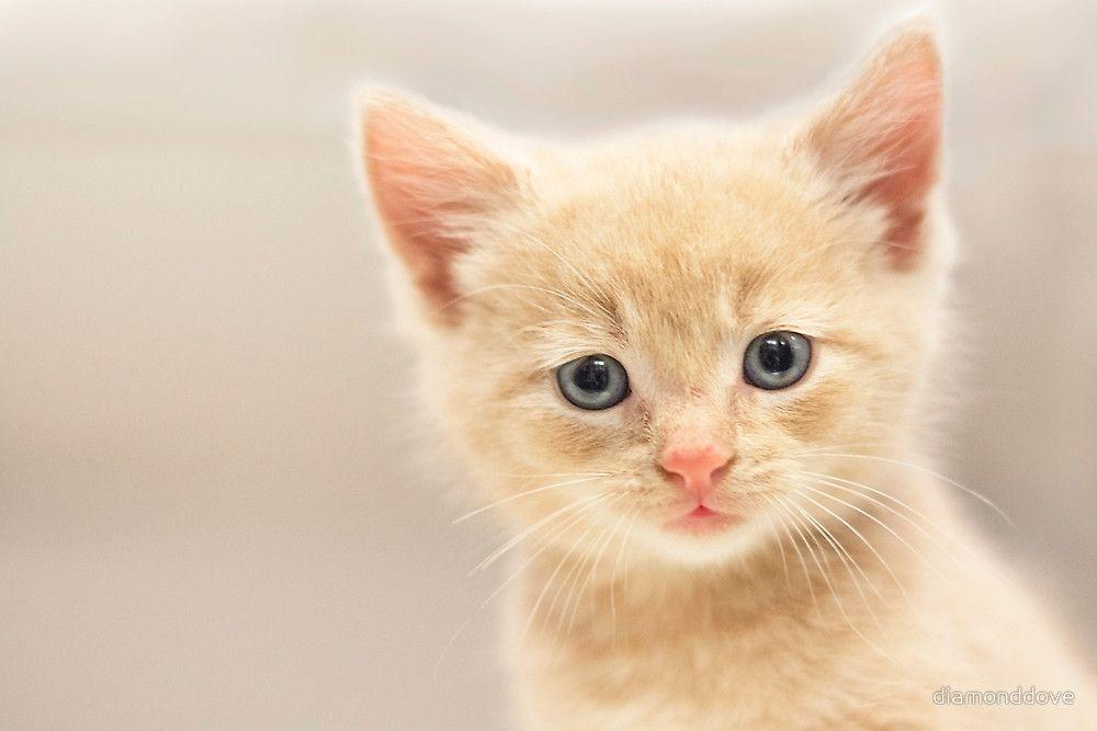 Ginger Kitten Art Print By Sarah Arthur Ginger Kitten Kitten Art Kitten Images
