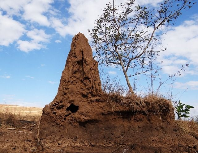 Image result for Public domain Images of termites and their mounds