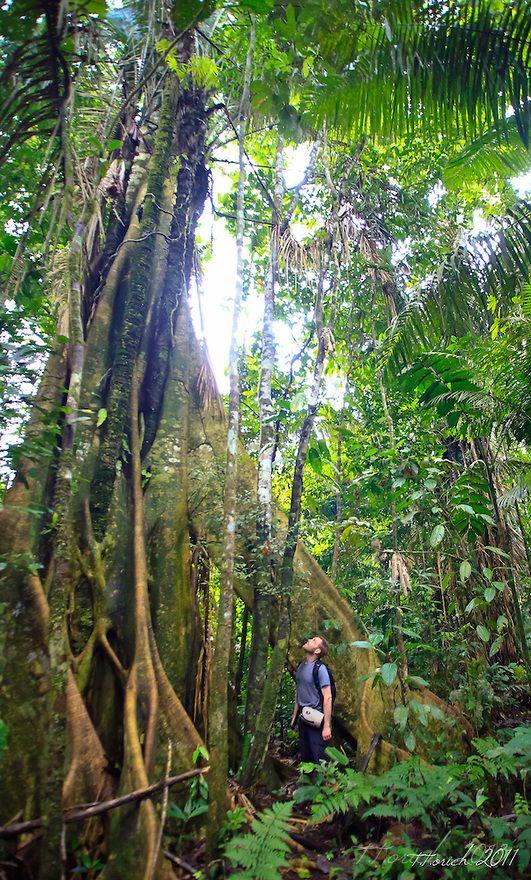 amazon rainforest location - 531×880