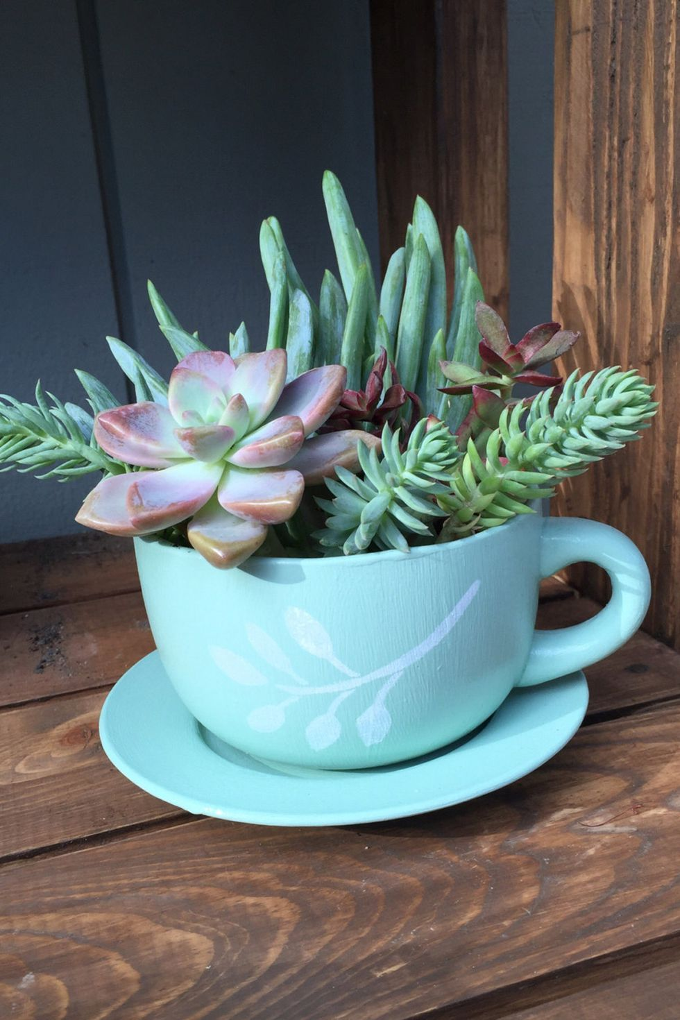 Cup And Saucer Succulent Planter Succulent Garden Diy Teacup Gardens Small Potted Plants