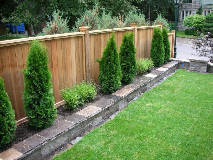 Pictures of backyard landscaping around fence visit for Backyard privacy landscaping trees