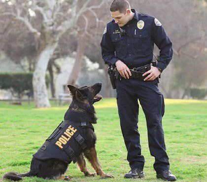 Policeone Com On Military Dogs Police Dogs Military Working Dogs