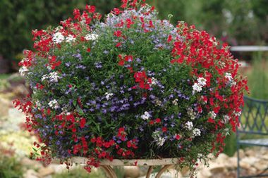 Patriotic Container Gardens Just in Time For Memorial Day