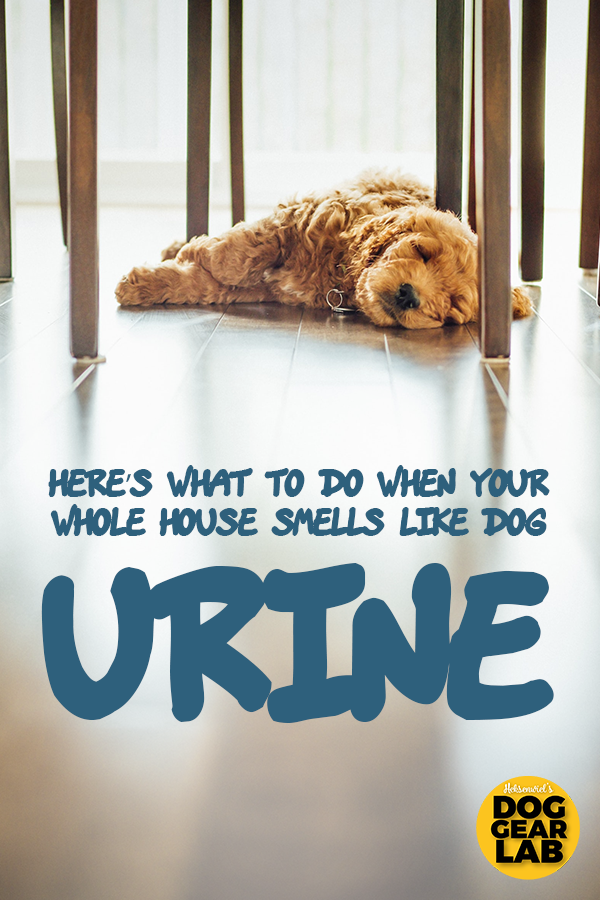 Here S What To Do When Your Whole House Smells Like Dog Urine Dog Urine Pet Odor Remover Diy Dog Stuff