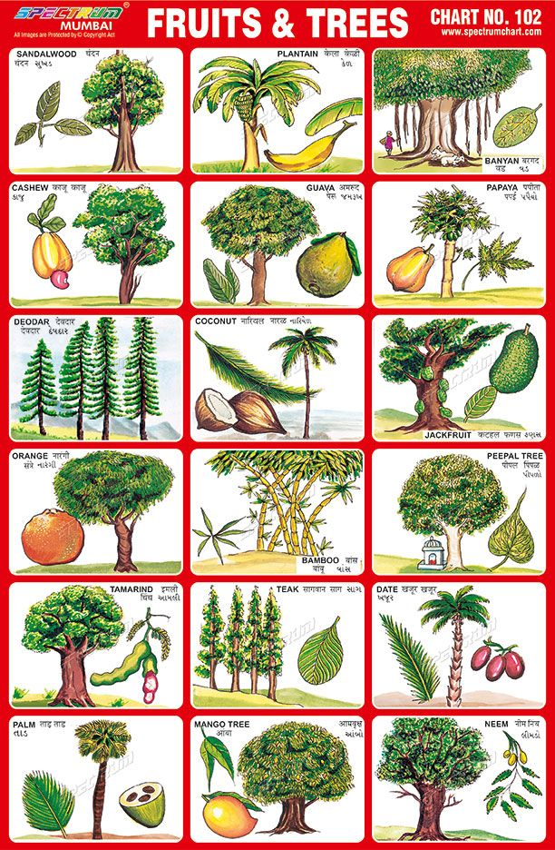 Fruits & Trees Charts for kids, Kids learning charts