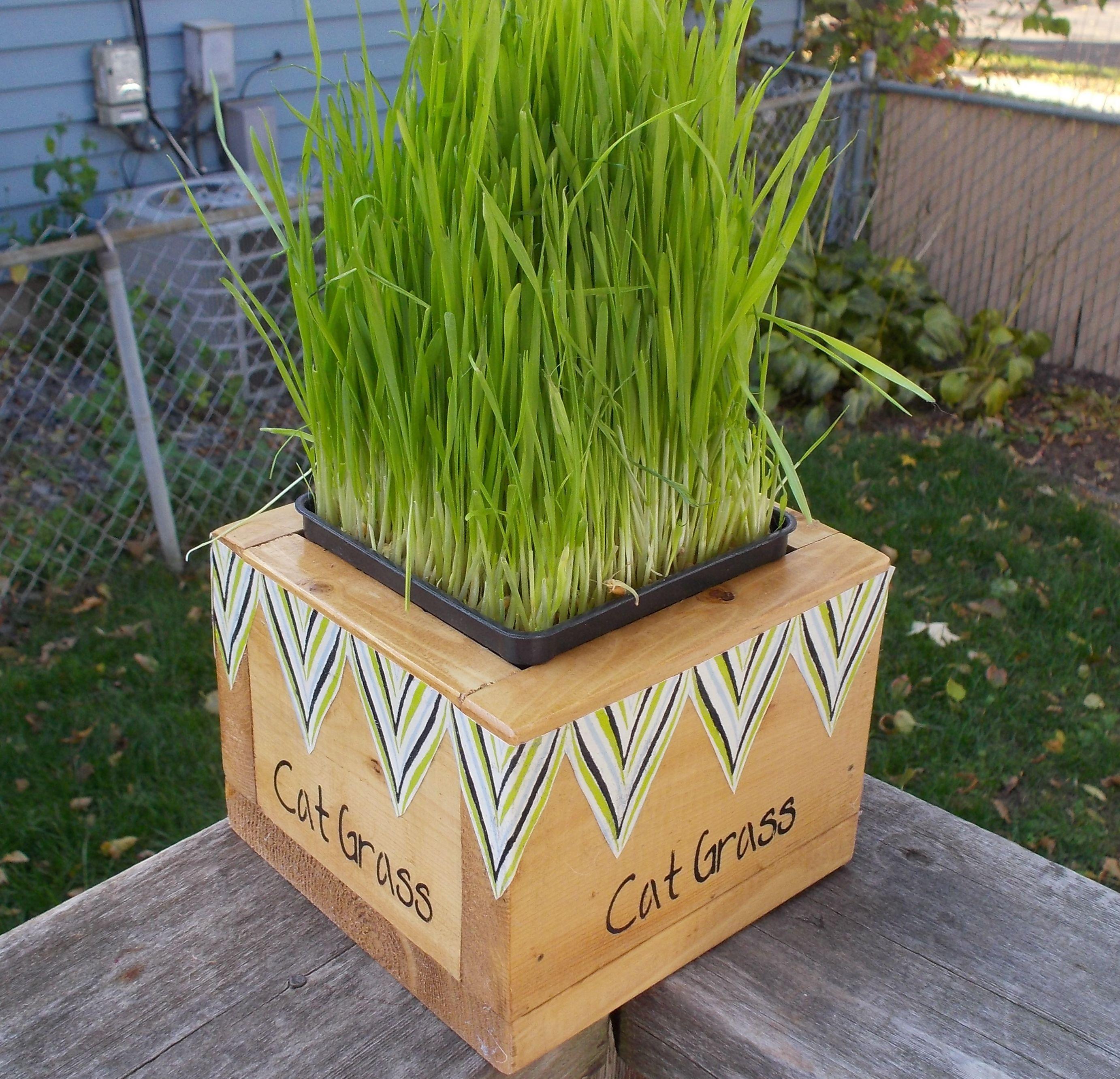 Cat Grass Box grow your own Cat grass box, Cat grass
