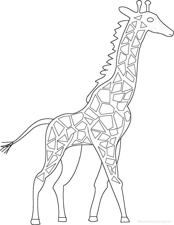 Giraffe: Fact or Opinion?, A Worksheet. EnchantedLearning
