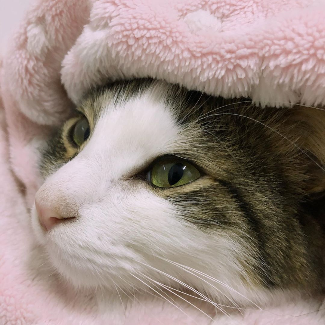 Top 10 Most Beautiful Cat Breeds In The World Kitten
