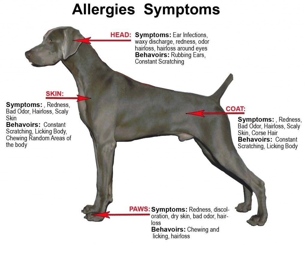Is Your Dog Suffering From Food Allergies Dog Nutrition Food