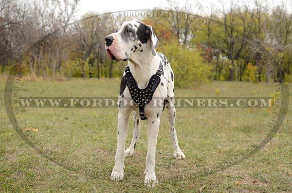 Adjustable Studded Leather Dog Harness For Walking And Training