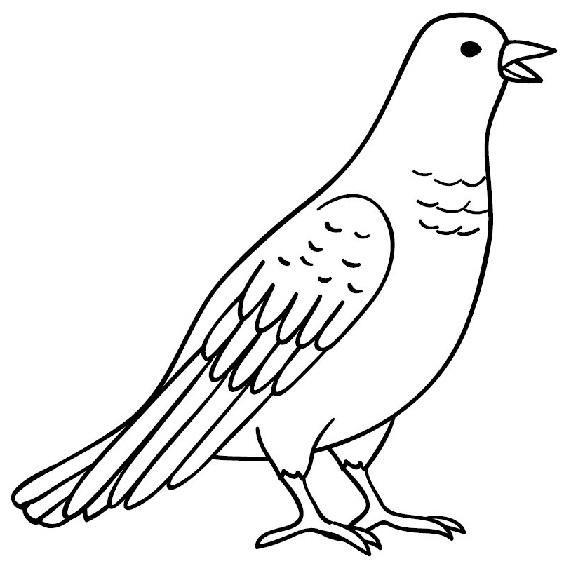 Gambar Burung Merpati Mudah Digambar Gambar Burung Burung Gambar