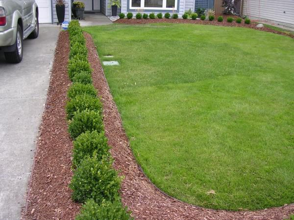 boxwoods and bender board border