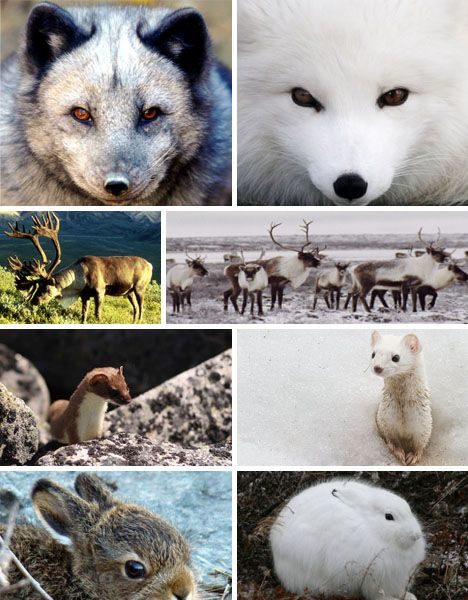 7 Color Changing Wonders Of The Animal Kingdom Science Pinterest