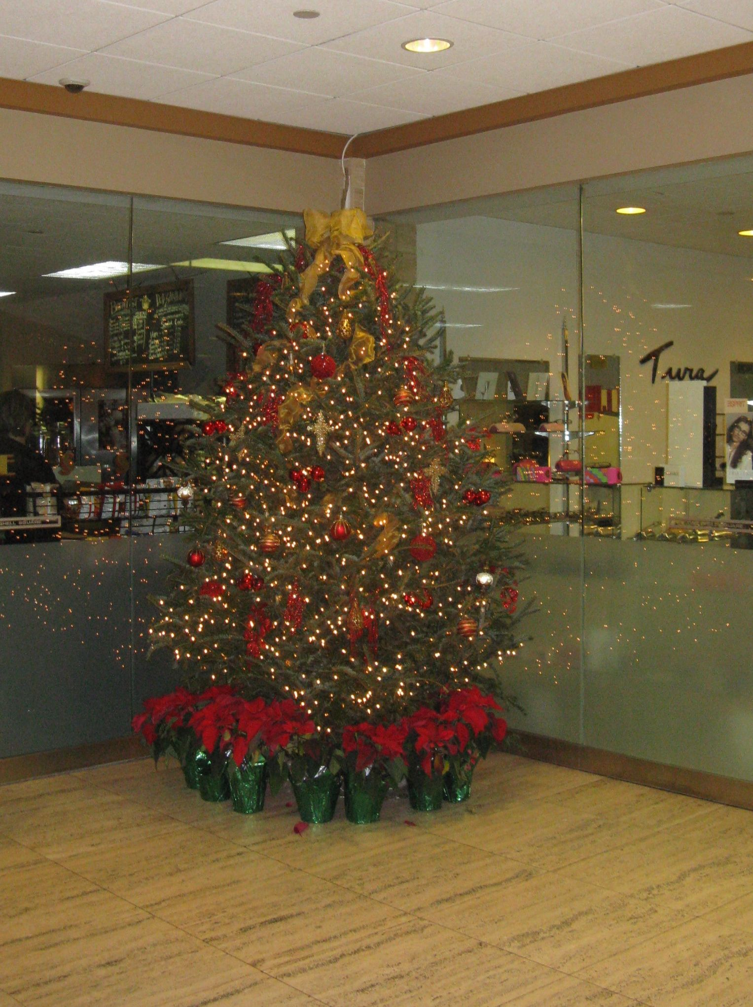 Christmastime at one shell square garden nursery plants